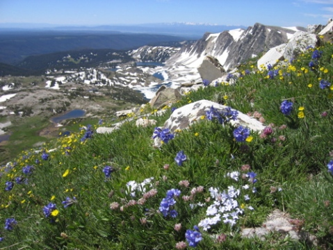 MF-Medicine Bow wildflowers