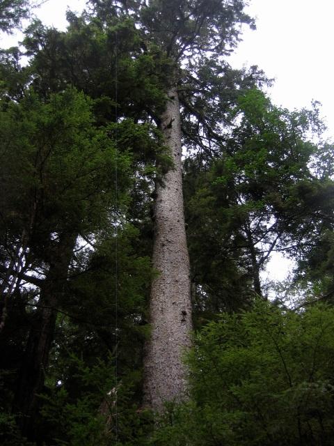 MF-tree1